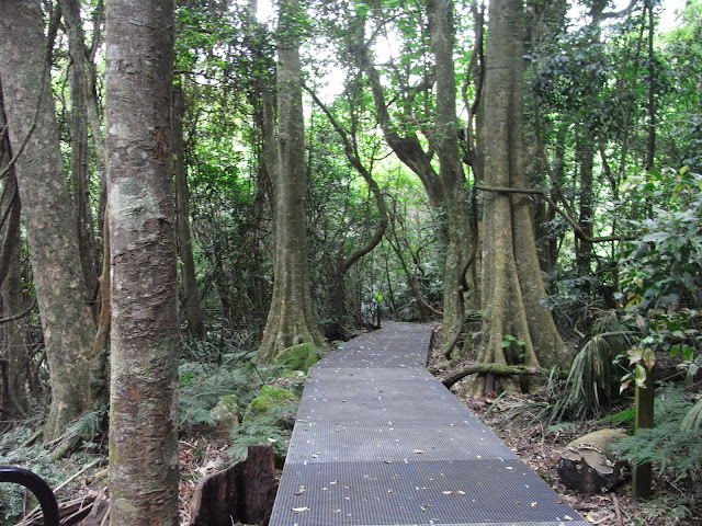 Boardwalk, Minnamurra Rainforest