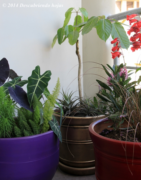 Descubriendo hojas el dise o de un balc n en lima per for Viveros en lima