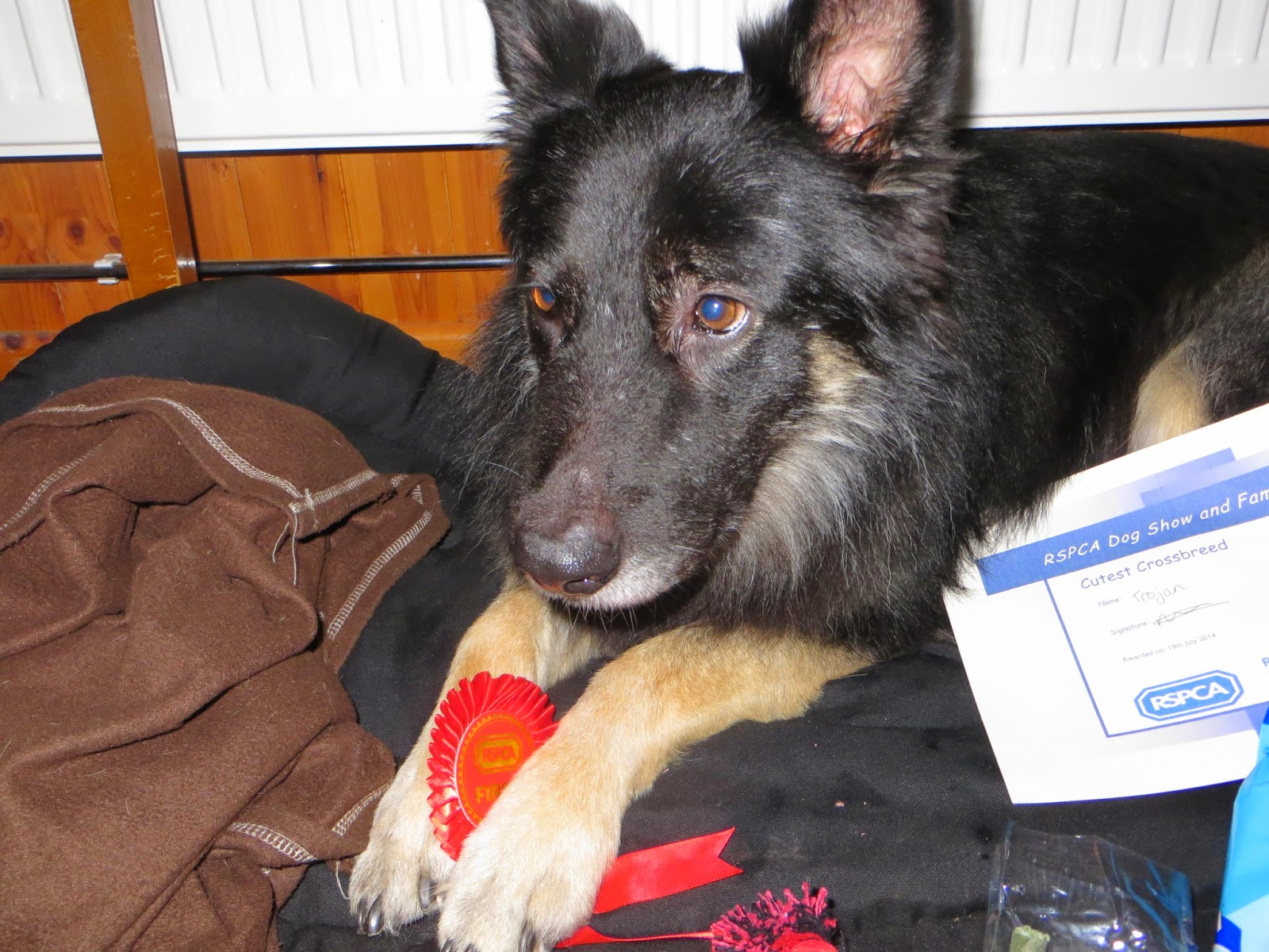 Trojan with his rosette and certificate.