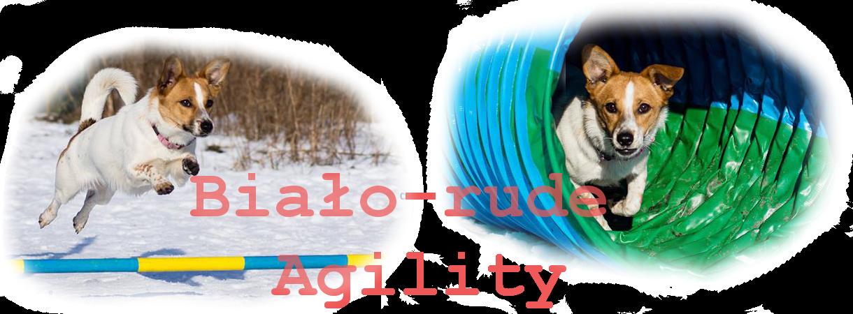 Biało-rude Agility
