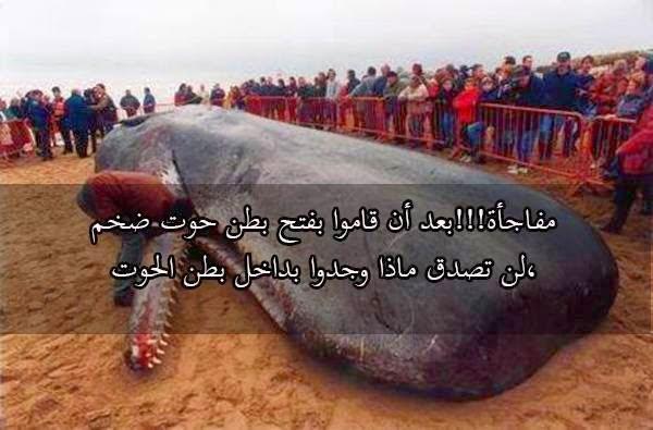 لن تصدق ماذا وجدوا بداخل بطن هذا  الحوت