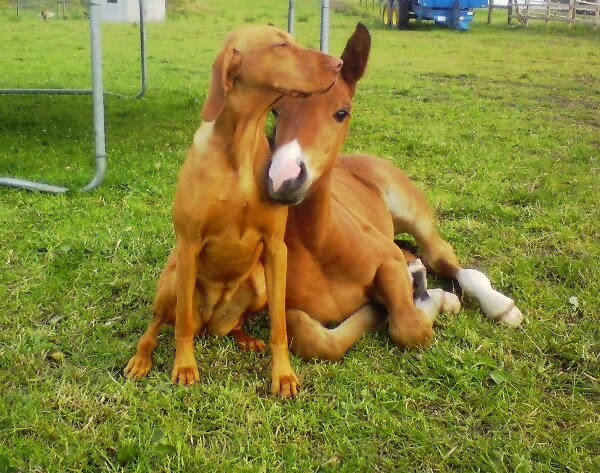 Funny animals of the week - 14 February 2014 (40 pics), baby horse and dog