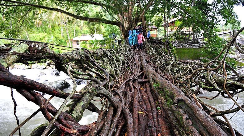 Jembatan Akar, el puente hecho de raices de árboles de Sumatra