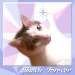 Shawn  RIP