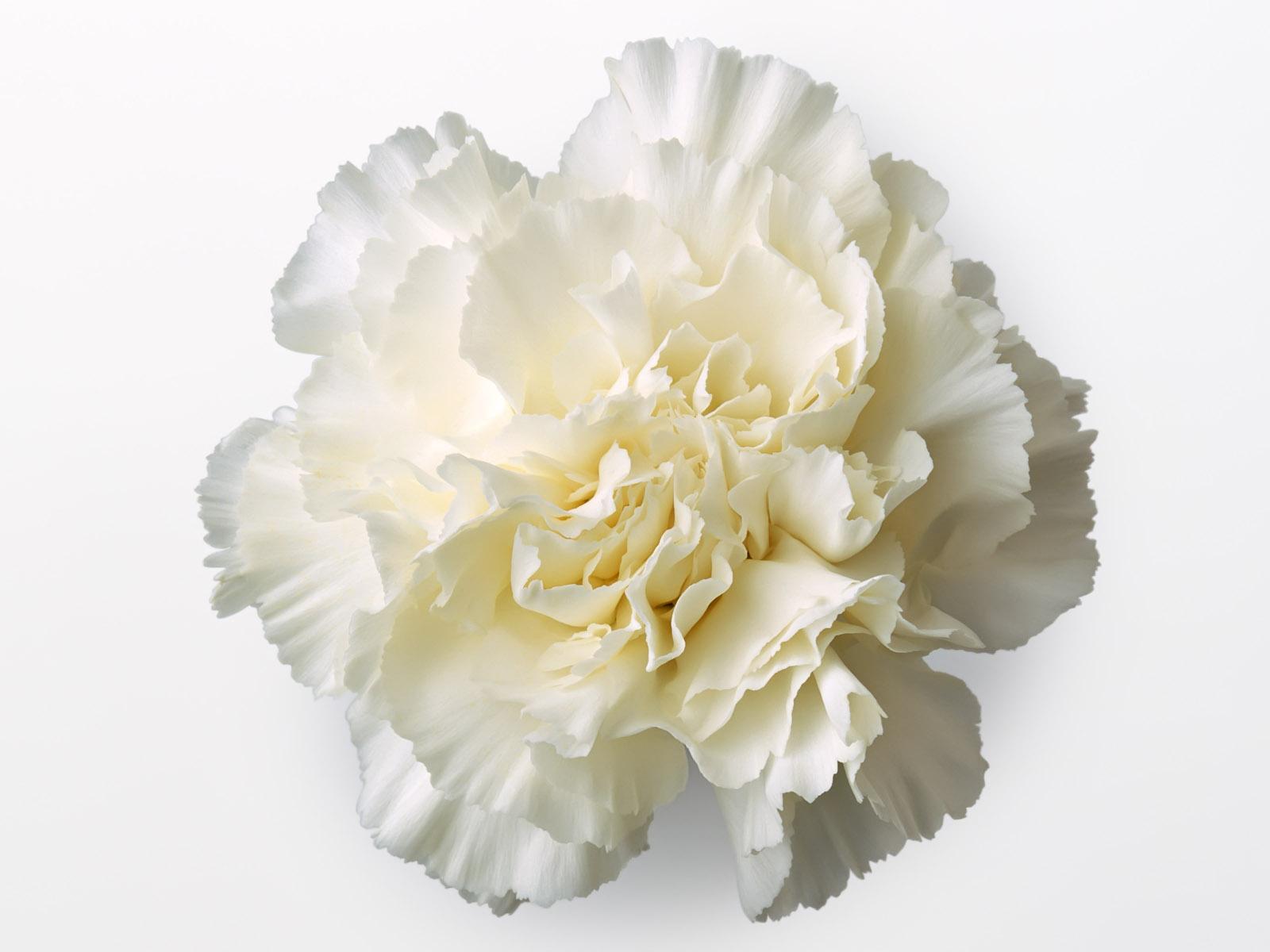 Beautiful-Flower-Photos