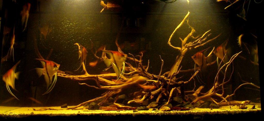 Borko S Hobbies Lago Quot Manacapuru Quot Black Water Amazon