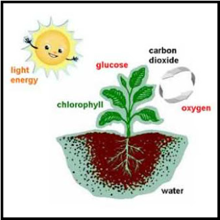 Proses dan Reaksi Fotosintesis pada Tumbuhan