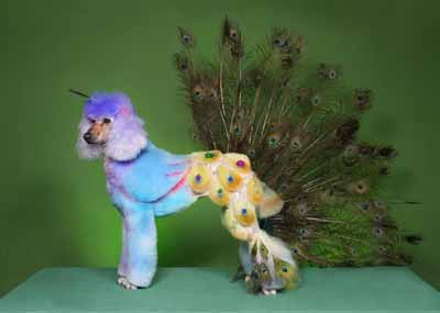 Exceptional dogs grooming design ideas modern color trends