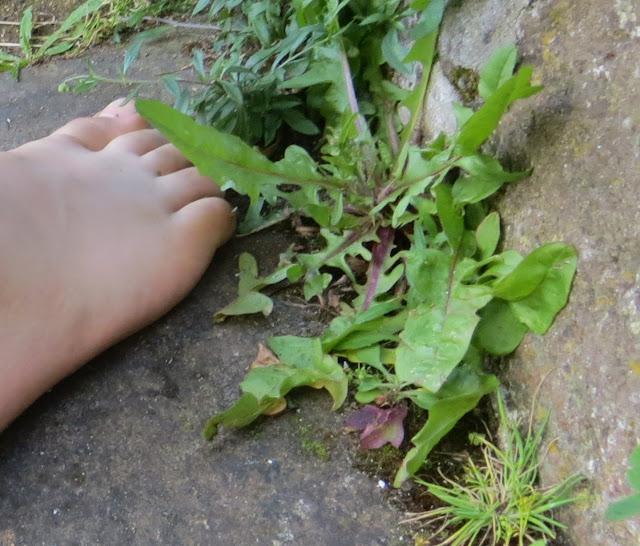 Ampliação Macro de Fotografia de Pé Descalço de Criança entre plantas que nascem em chão de pedra