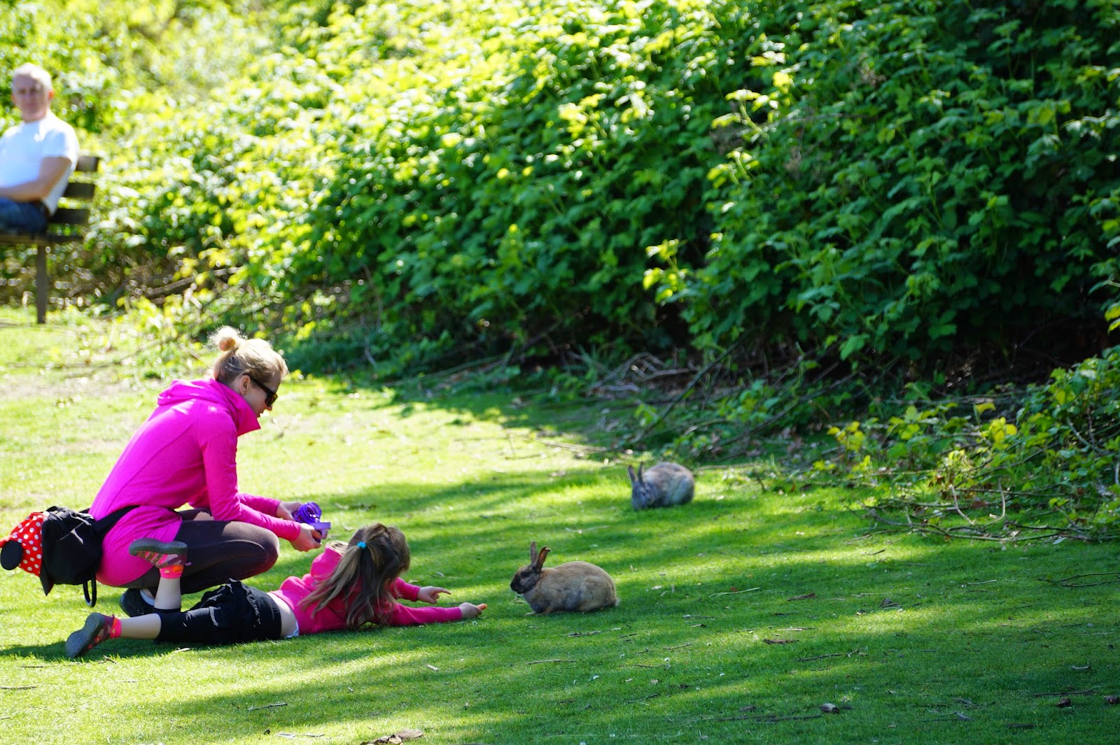 А еще в парке можно встретить кроликов, живущих в местных кустарниках.