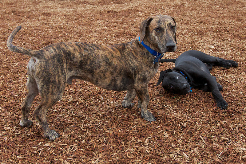 The Long and Short of it All: A Dachshund Dog News Magazine: Those ...