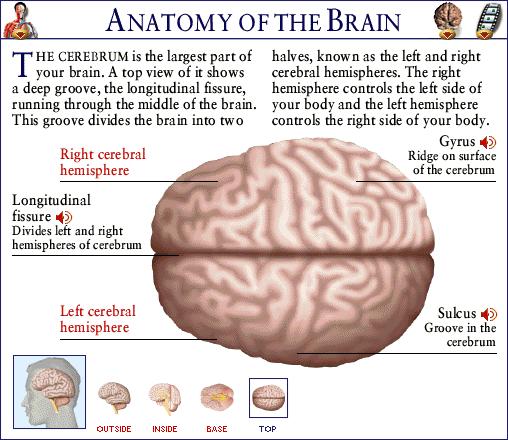 various brain tumor detection techniques essay