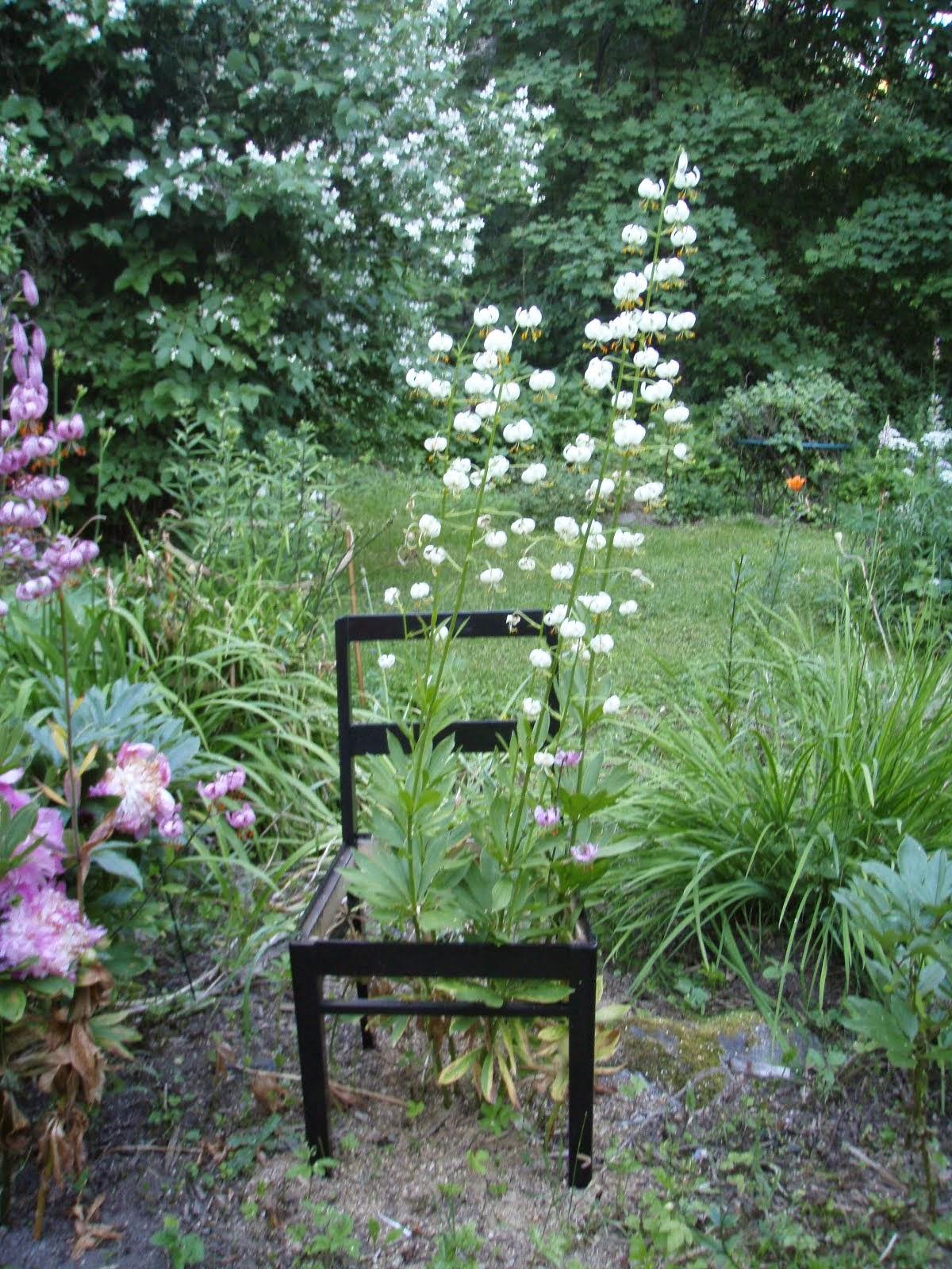 Kukka puutarhassa