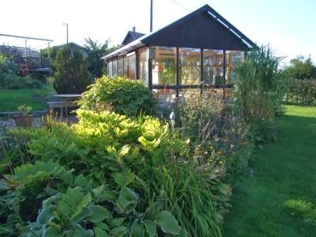 Perennrabatt och växthus