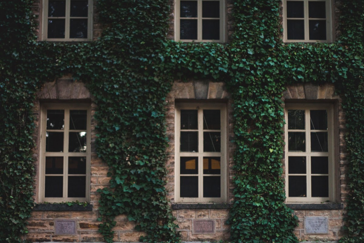 princeton ivy covered wall