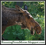 Running From Moose
