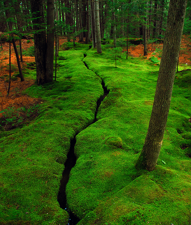 What Is Moss? Moss Is Big Business. Gardeners Who Want To Add Moss To Their  Landscapes Can Purchase Products Like A Moss Kit In A Carton Or Even Order  Moss ...
