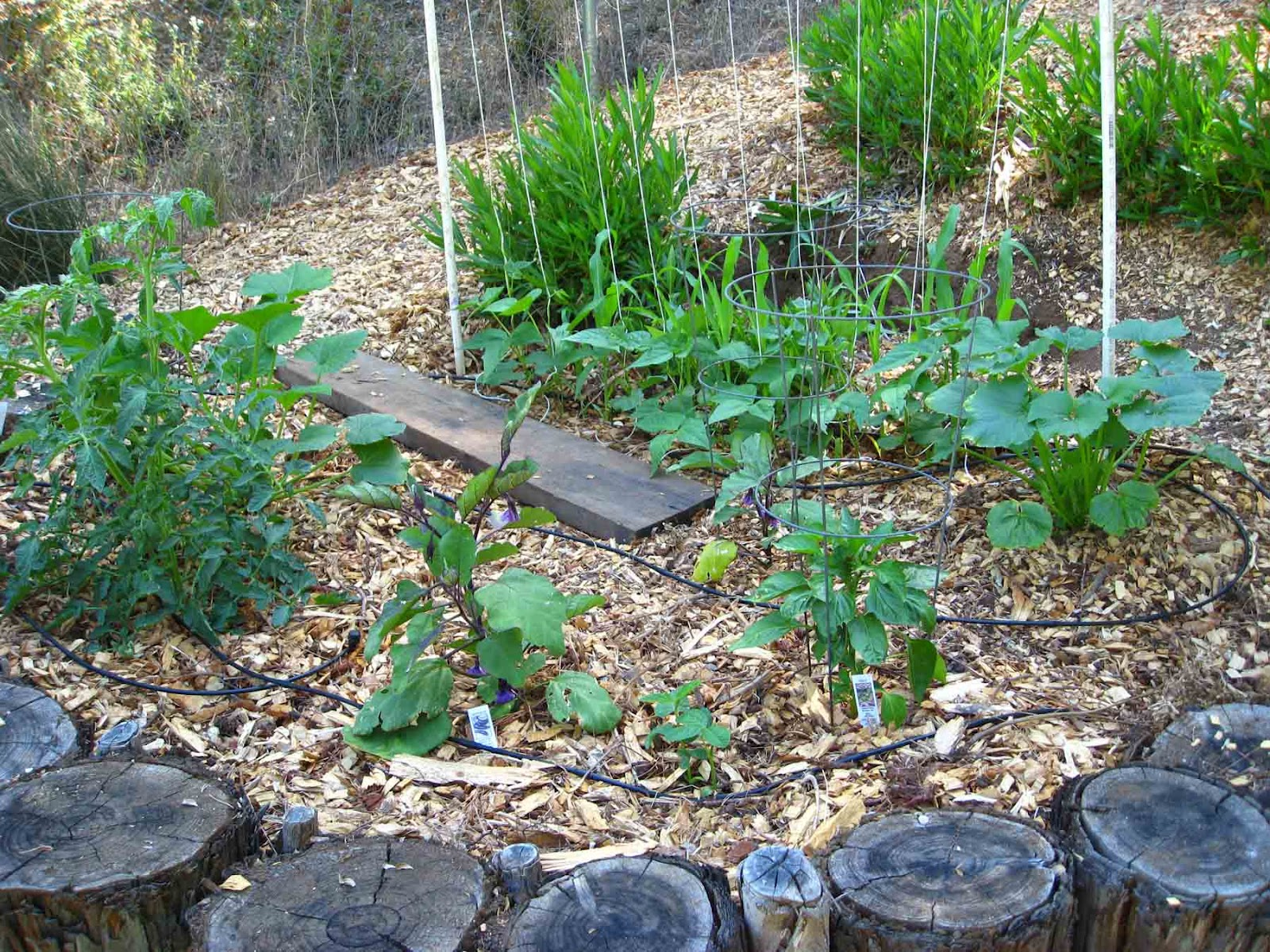low cost vegetable garden wood chip bed