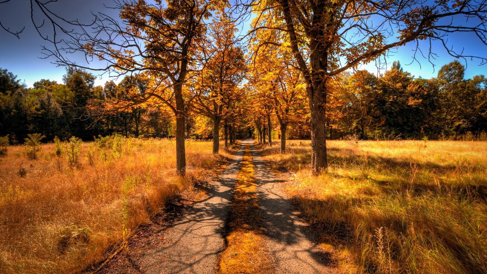Autumn tree landscape download 1920x1080