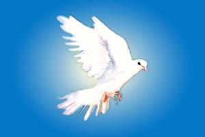 Pombo branco voando, céu azul e ensolarado.