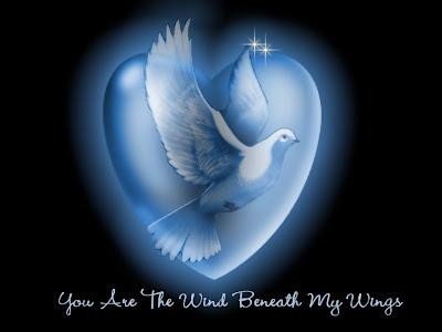Bijela golubica, Valentinovo download besplatne čestitke slike pozadine za desktop