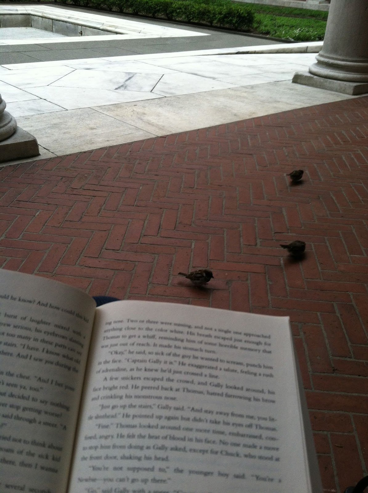 book and birds