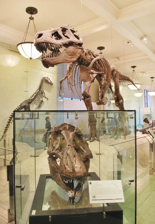A Trip to the American Museum of Natural History in New York City | Em Busy Living