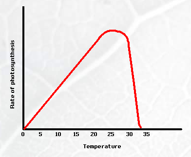 How does temperature affect the fermentation of yeast?