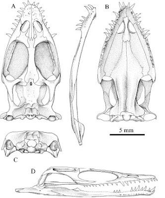 Keichousaurus
