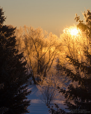 Across the hall, the sun blazes trees, ice, snow. photo © Shelley Banks; all rights reserved.