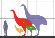 Curiosidades y ciencia - Página 2 220px-Dinornithidae_SIZE_01
