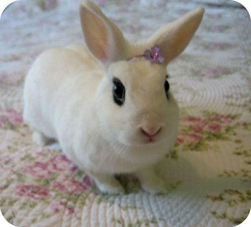 princess rabbit