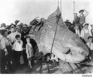 Kumpulan Foto Monster Laut Yang Pernah Tertangkap