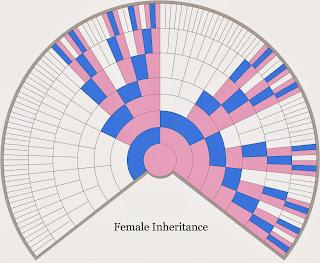 http://4.bp.blogspot.com/-zeudaGTif30/UsXALa9LDMI/AAAAAAAAAyk/BBTRLnPle7k/s320/X-Chromosome+fan+chart+female+-+from+Blaine+300dpi.tif