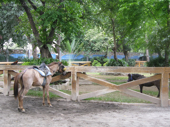 Horses for rent in Manila Zoo