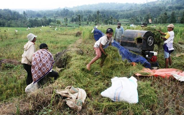 Kemtan Akan Subsidi Petani Gurem