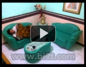 Free Download Video Abarudin Bona 3GP / MP4 / FLV / MPEG