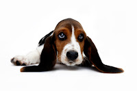 External Ear Infection In Dogs