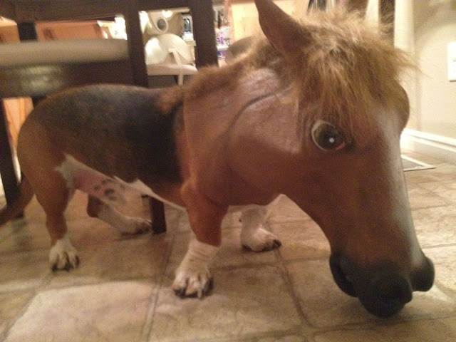 dog wears horse head, funny animal pictures, animal photos, funny animals
