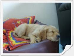 MY DOG CHOCO IN DEEP SLEEP