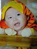 四个月大的小老虎