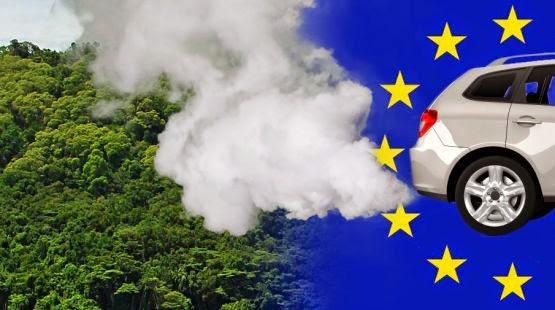 PETISI: Penebangan hutan untuk perlindungan iklim? Tidak, terima kasih!