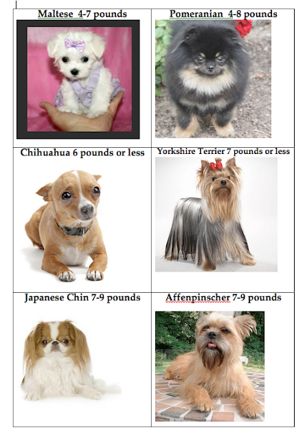 Dog Breeds Weighing Under  Pounds