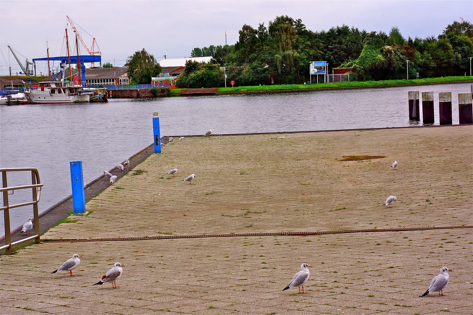 Picture of seagulls in Emden, Germany.