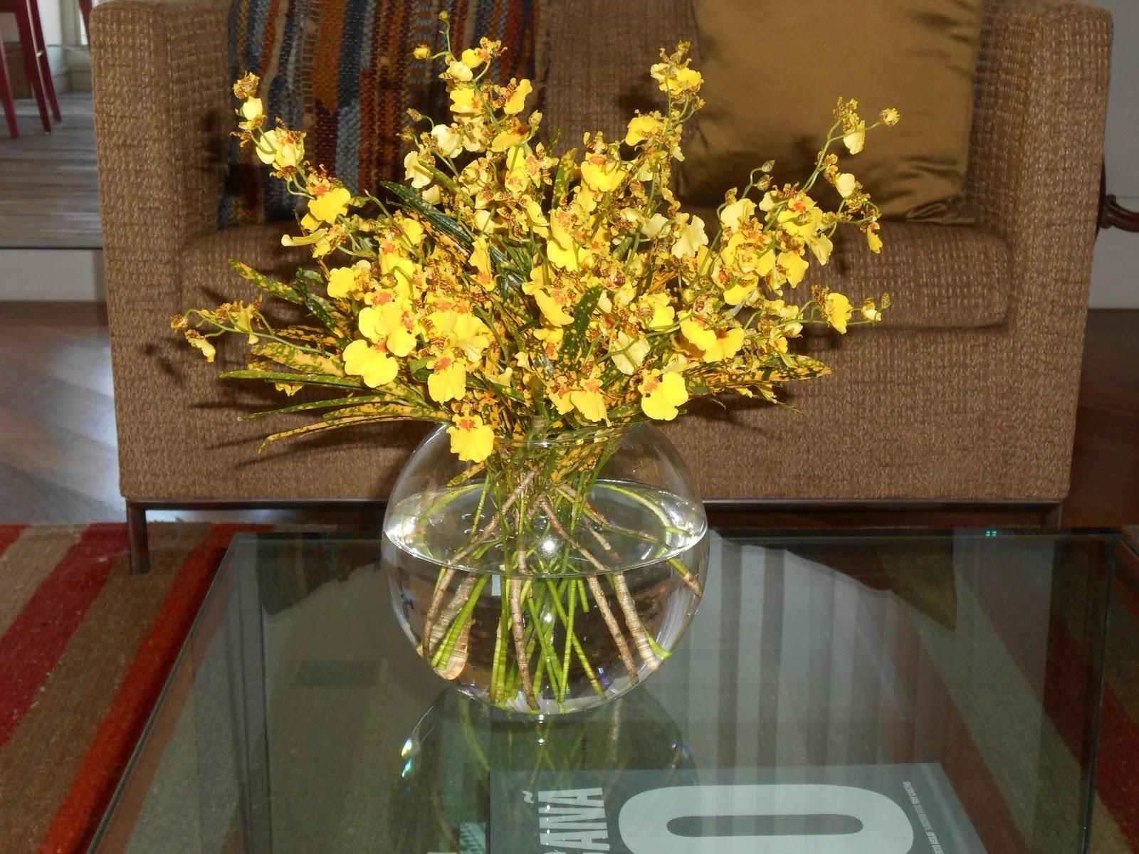 flores jardim guedala:Flor de Lis Flores: Manutenção em residência