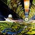 Προοπτική διαπλανητικών ταξιδιών μέσα σε αστροπολιτείες