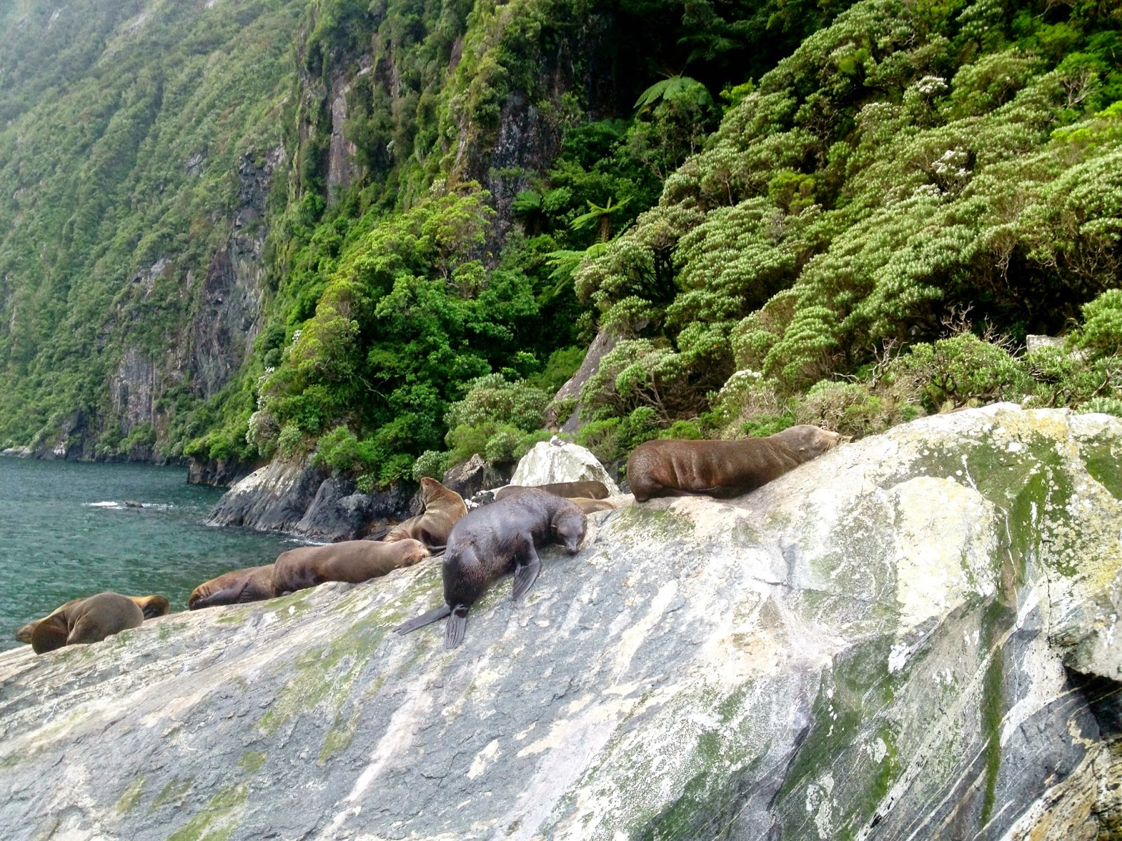 Seals in the Milford Sound, Fjordland, New Zealand