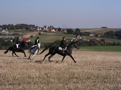 Konie, jazda konna, Hubertus 2015, pensjonat dla koni w Węgrzcach, pogoń za lisem