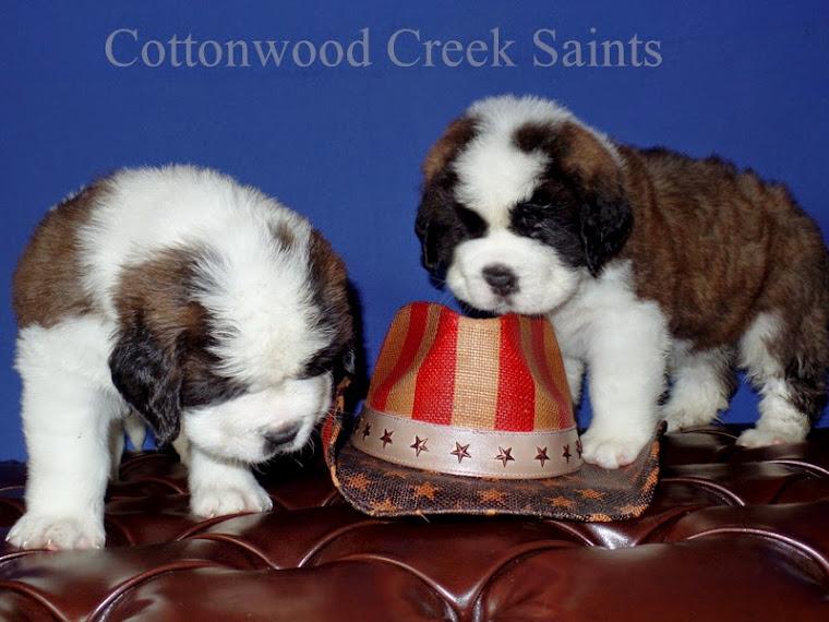 COTTONWOOD CREEK SAINTS