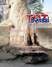 DR 24 TOT Bonsai